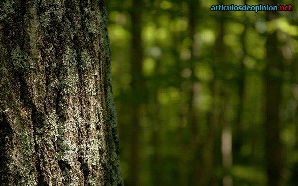 Bosque hadas