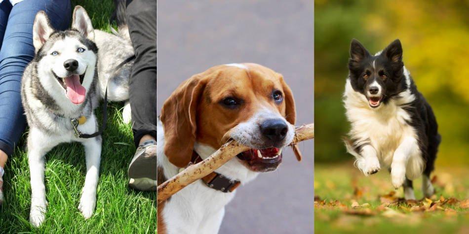 Las razas de perro más valoradas